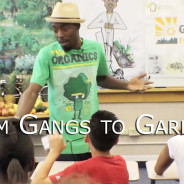 From Gangs to Gardens